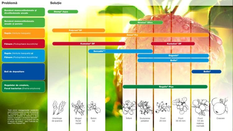fâie de ardere pentru mezomorfe 8 diferența de pierdere în greutate