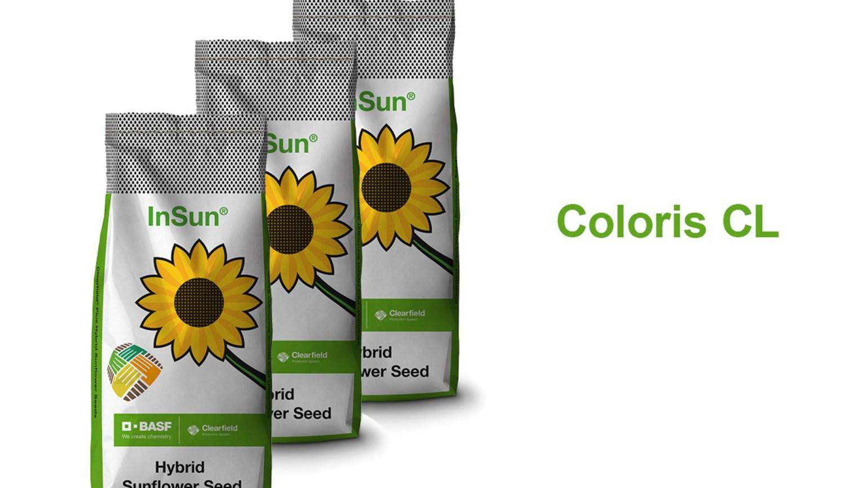 semințe de floarea soarelui cu varicoză