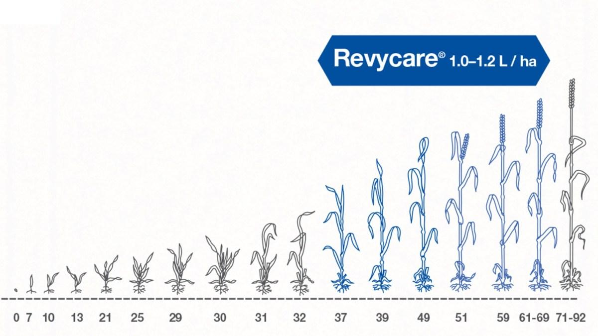 perioada aplicare fungicid revycare